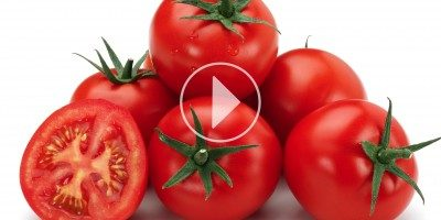WORLD TOMATO PROCESSING LEADERS MEET IN SANTIAGO DE CHILE